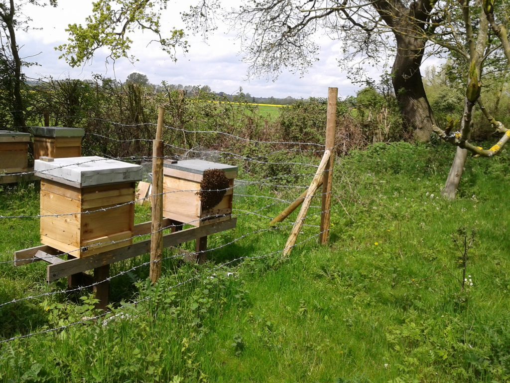 The hive on the right has swarmed